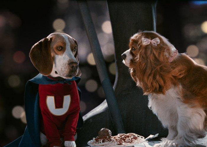 Underdog-Beagle Shoeshine hat sich in Spaniel-Hundedame Polly verliebt