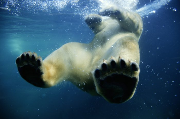 Ein Bad bei minus 30 Grad macht müde Bären munter