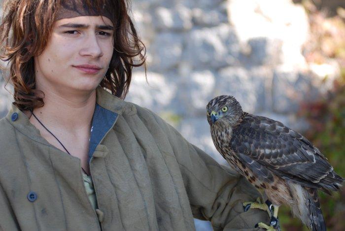 Falken oder Tauben