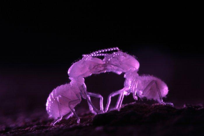 Termiten bevorzugen die Dunkelheit