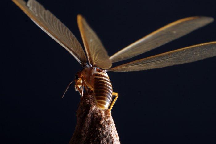 Eine Libelle ist auf dem Termitenhügel gelandet