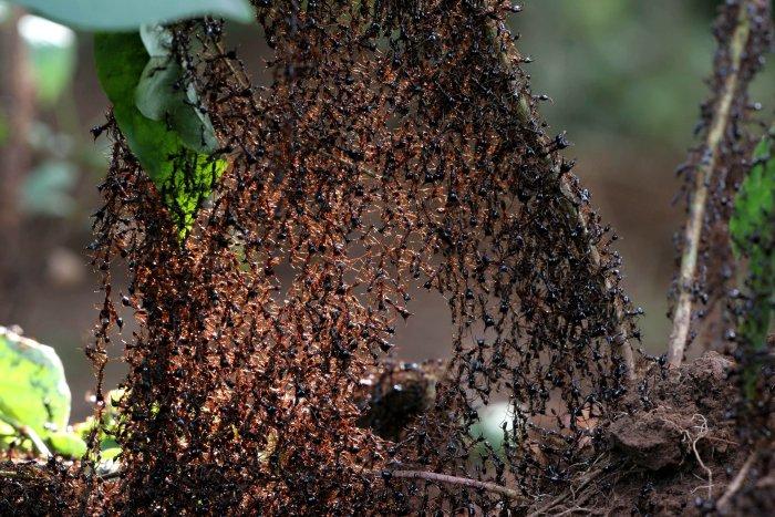 Gemeinsam Stark: Die Ameisen-Armee