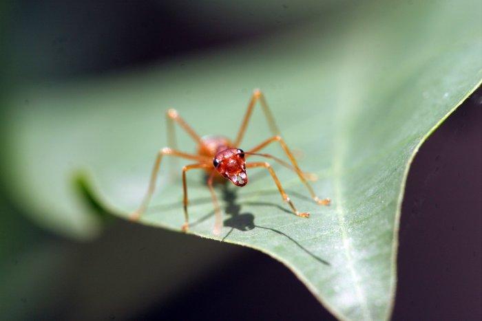 Ein einzelnes Insekt ist verletzlich