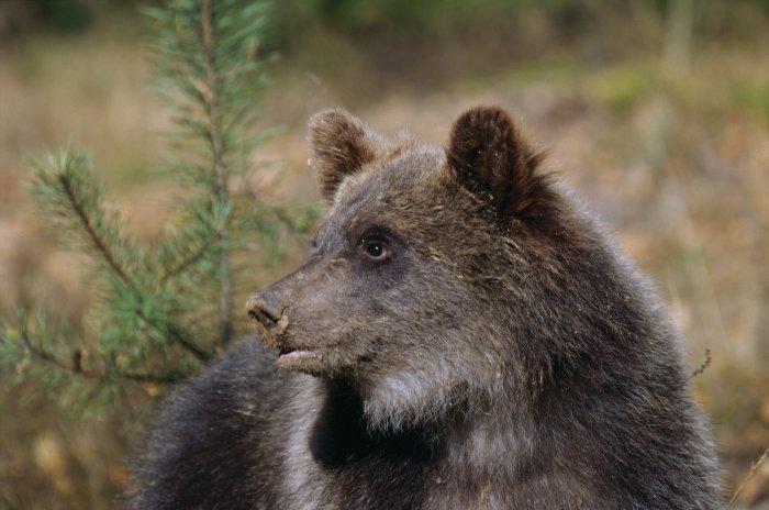Knuts Verwandter in Weißrussland