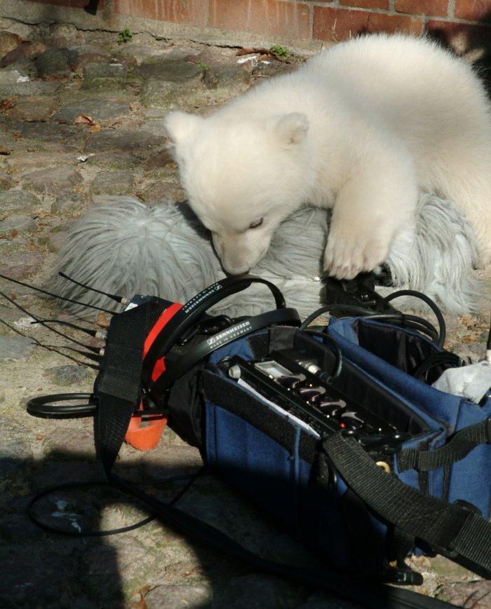 Knut ist ein echter Filmprofi