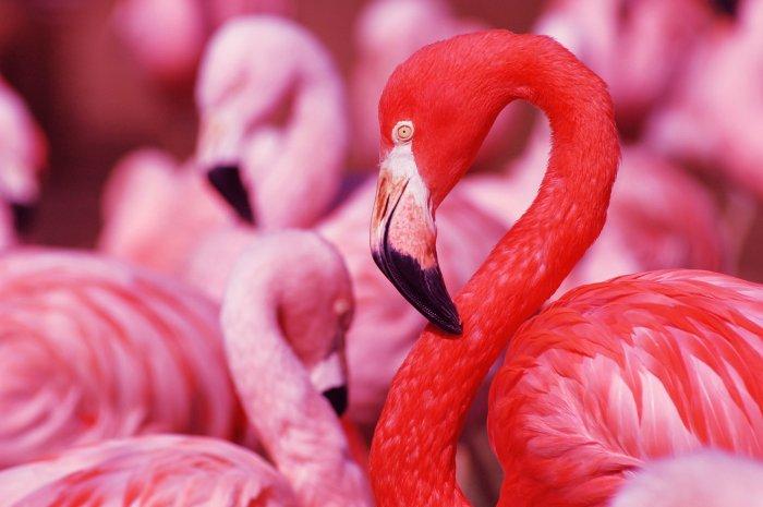 Flamingos für ein harmonisches Zusammenleben