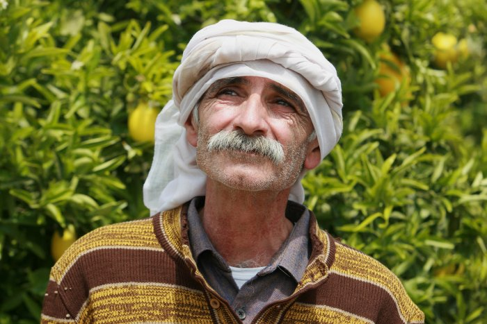 Abu pflegt die Zitronen schon lange Zeit