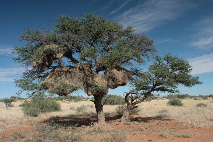 Ein Baum bietet Schatten in der Wüstensonne
