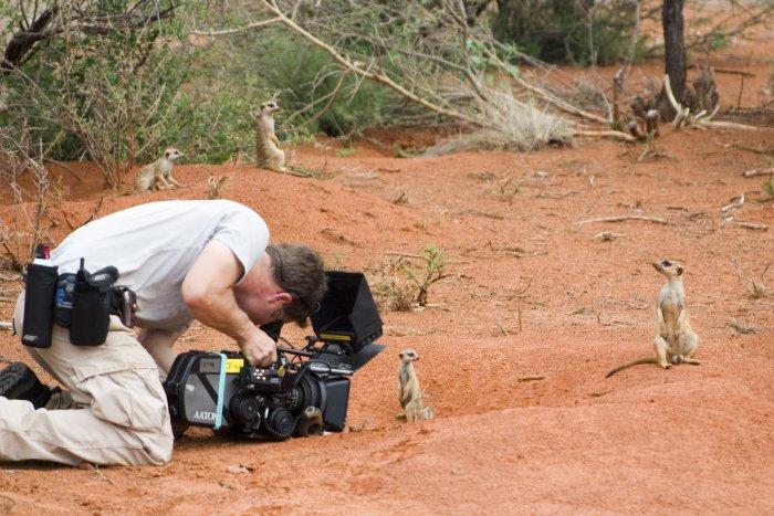 Die Erdmännchen sind nicht kamerascheu