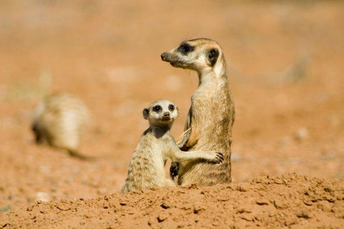 Kolo und seine Mutter